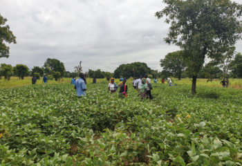 Farmers stand in a field