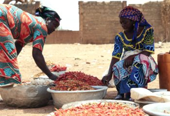 Women Sort Chili Peppers in Kenya
