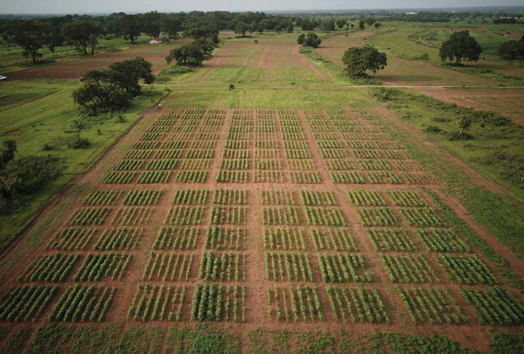 photo of a field in ghana taken by a drone