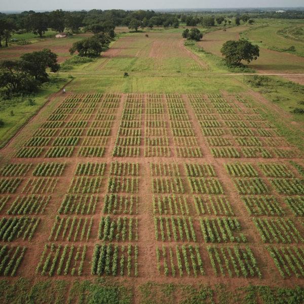 photo of a field in ghana taken by a drone