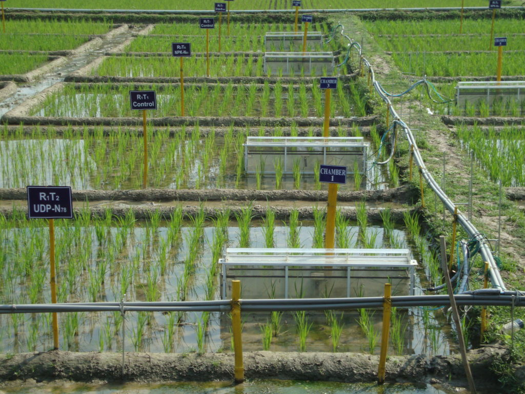 Greenhouse gas measurement devices in a rice test field