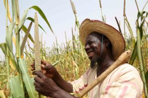 A man inspects his millet crop