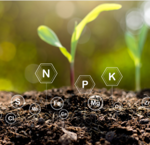 A picture of soil nutrients and a plant