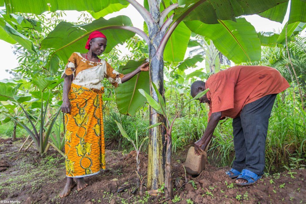 The farmers work on their farm