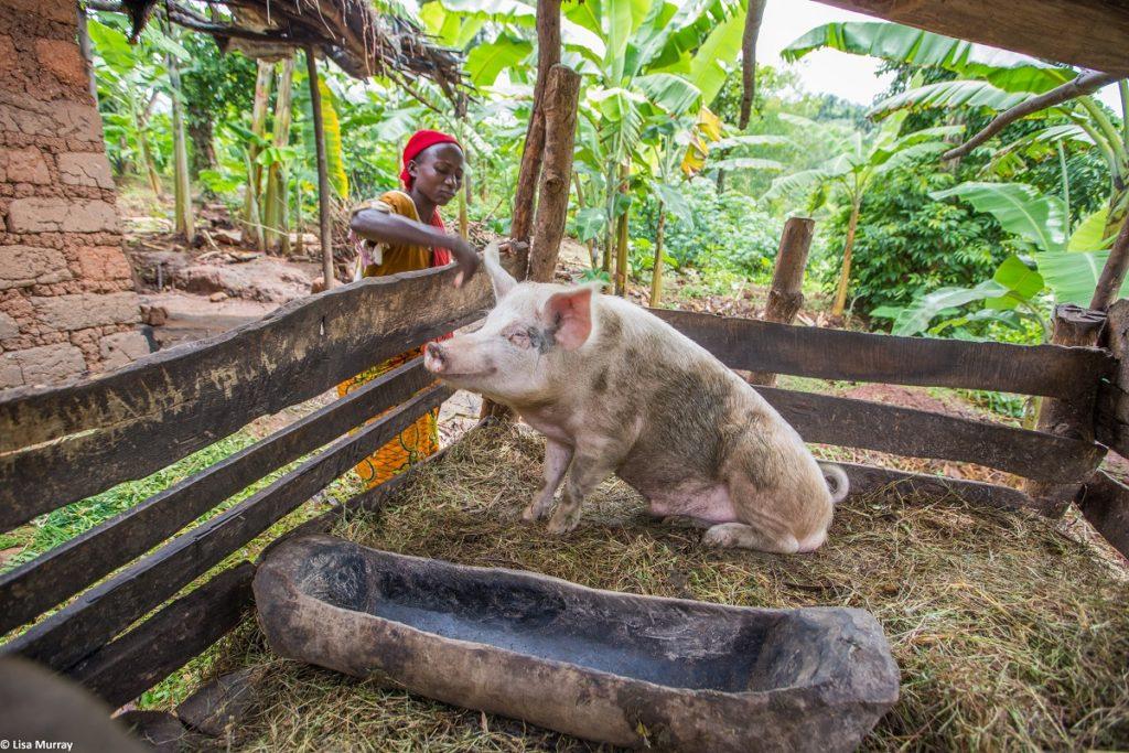 A woman feeds her pig