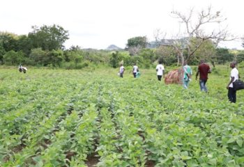 A group of people walk through a demonstration farm