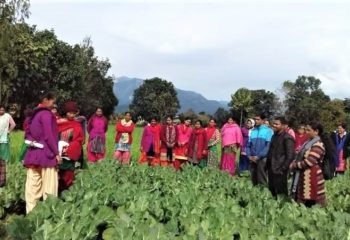 Women farmers participating in farmers field day of cauliflower in Masuriya