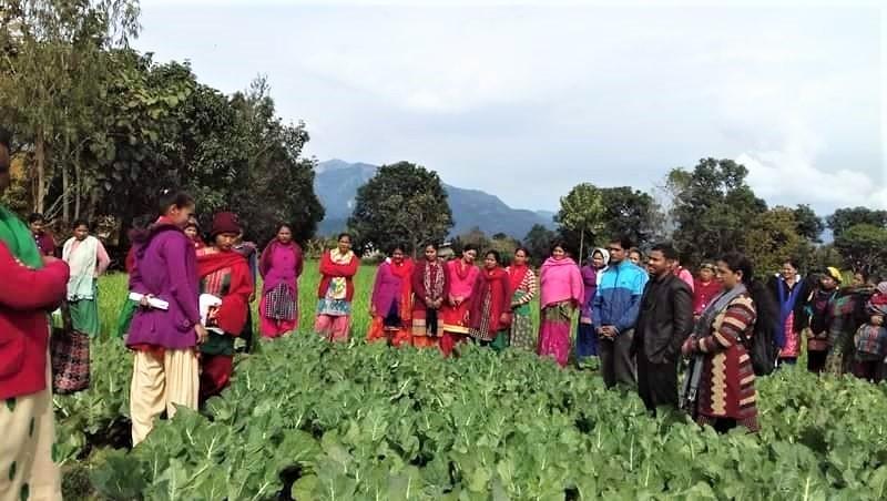 Women farmers participating in farmers field day of cauliflower in Masuriya