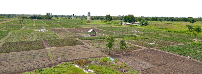 Field View of a Hydro-Agricultural Site For The Production Of Chili Pepper In Itagui Dassa