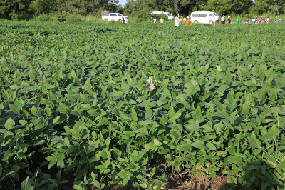 Educational Field to Demonstrate Good Agricultural Practices for the Intensification of Soybean Production