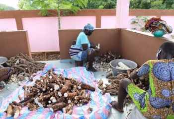 Women peeling cassava in the gari processing unit of Gankpétin
