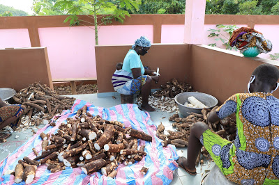 Women peeling cassava in the gari processing unit of Gankpétin