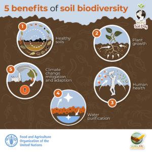 5 benefits of soil biodiversity