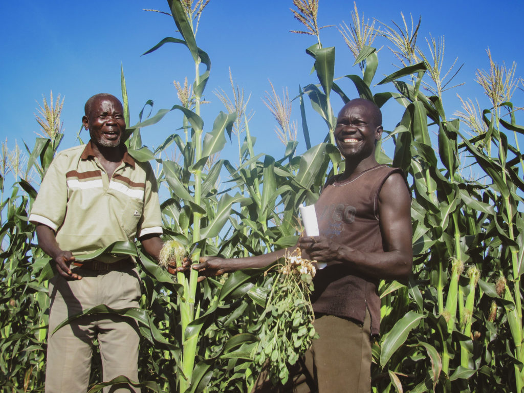 south sudanese farmers display their maize