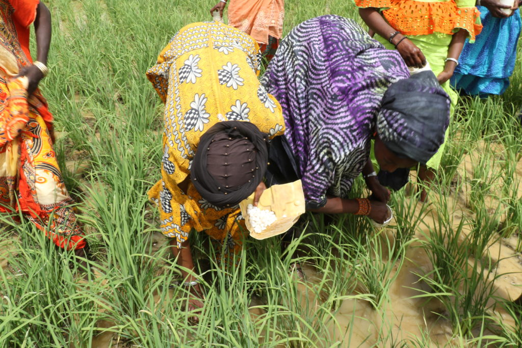 Women applying UDP in Senegal