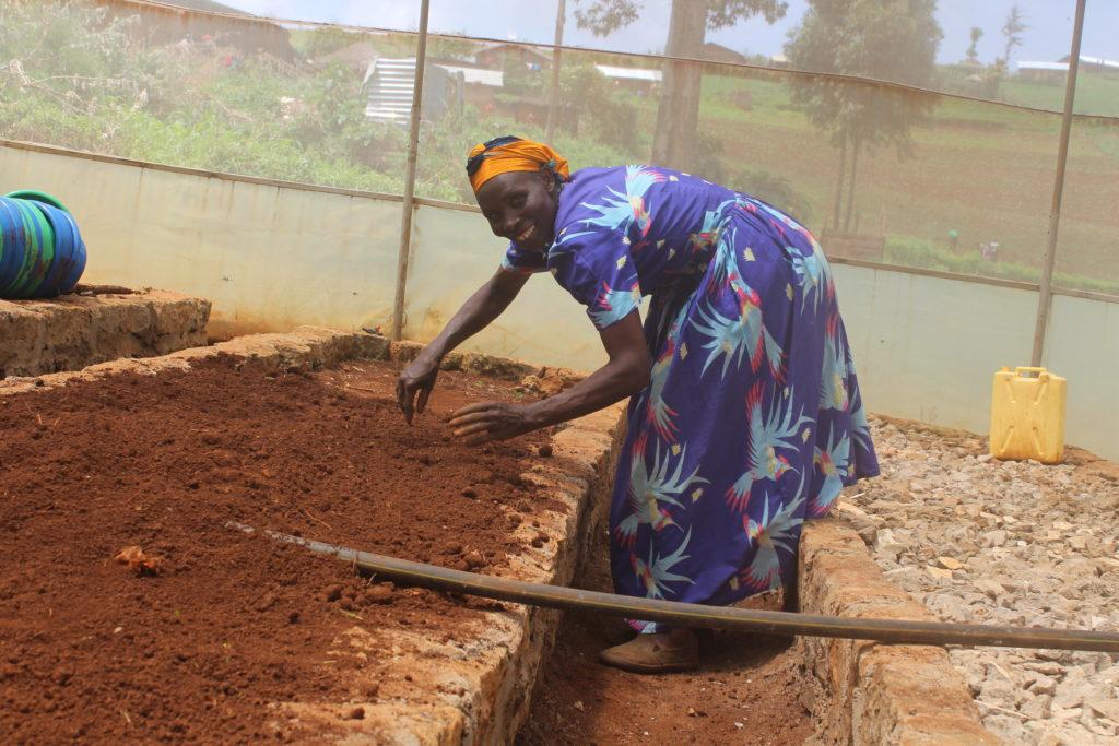 MIFA Seed Producer